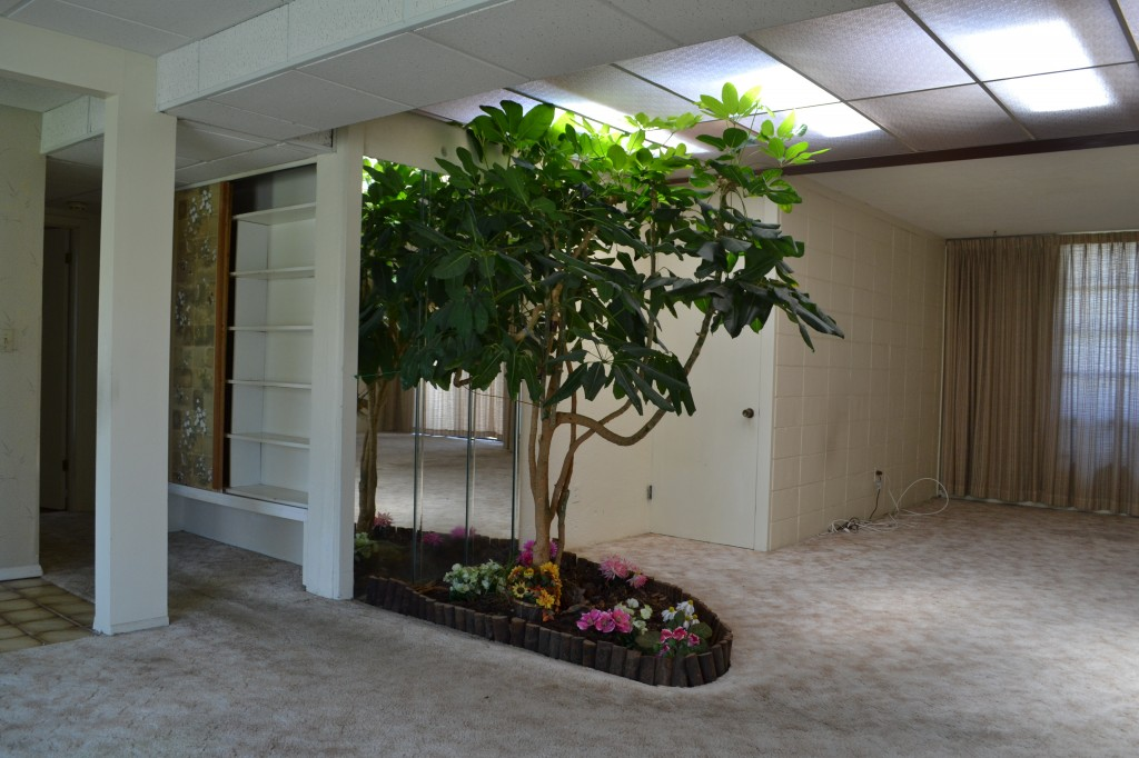 INdoor Tree